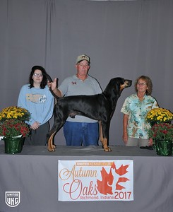 Saturday Black & Tan Grand Champion Male
