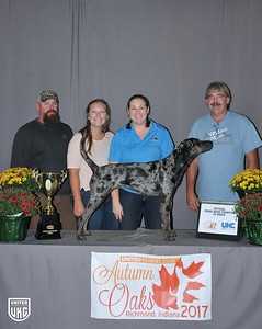 National Grand Show Champion American Leopard Hound
