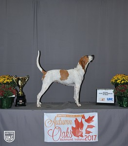 National Grand Show Champion English Dog