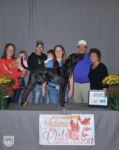 National Grand Show Champion Opposite Sex American Leopard Hound