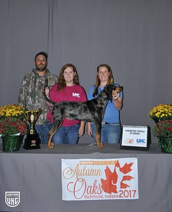 Saturday American Leopard Hound Champion Female