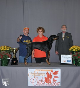 Saturday Black & Tan Champion Female