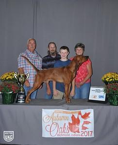 National Grand Show Champion Redbone