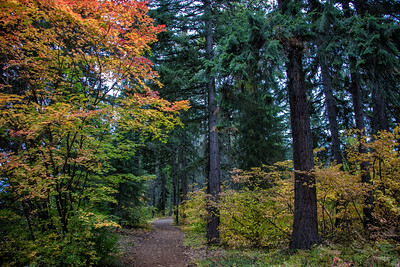 Path in the Forest Fall Color Lake Easton 9-30-18