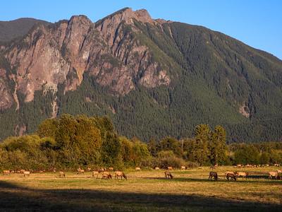 Elk Herd Mt Si Golden Hour Early Fall 9-28-18