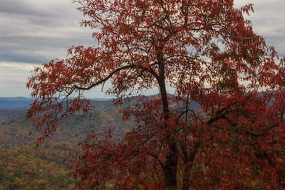 Red leafed tree fall color background Blue Ridge Parkway 10-22-17
