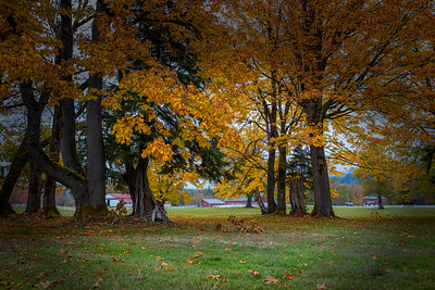Autumn at Mountain Meadows Farm