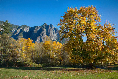 Pasture Large Maple Fall Color Mt Si Monet Impression