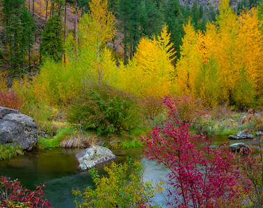 Tumwater Color Explosion
