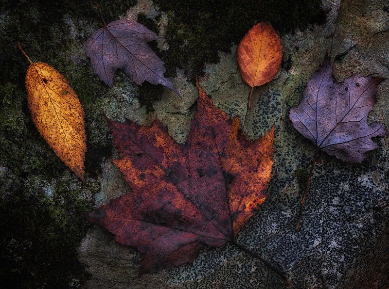 Leaves, Moss, Lichens, Rock