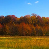 trees autumn colors 2016 IMG_9977