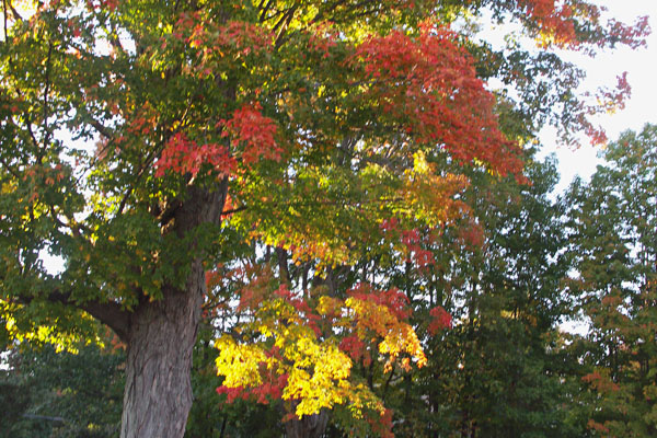 Autumn Foliage, Concord, Massachusetts