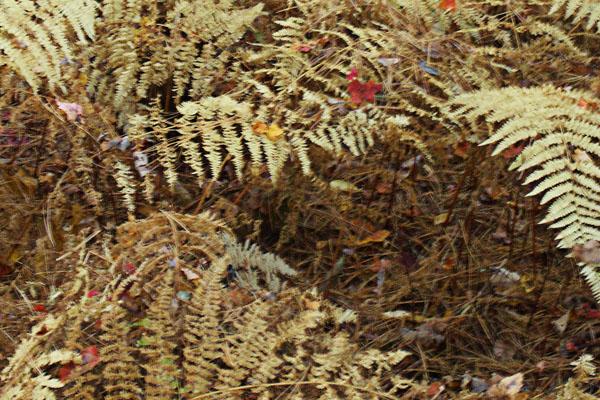 Ferns, Cutler Park, Needham