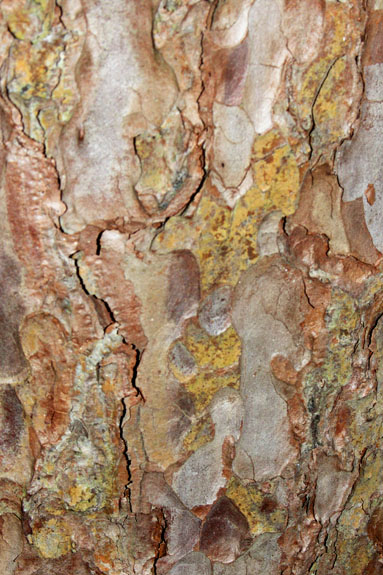 Tree bark, Cutler Park, Needham