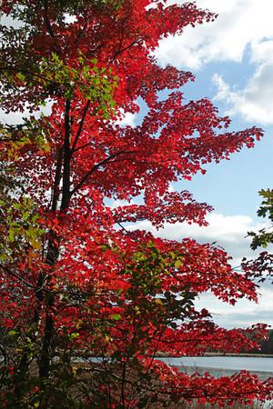 Autumn Foliage 2008 and Author's Graves