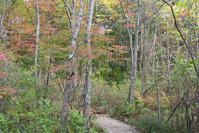 The boardwalk at Moose Hill.......