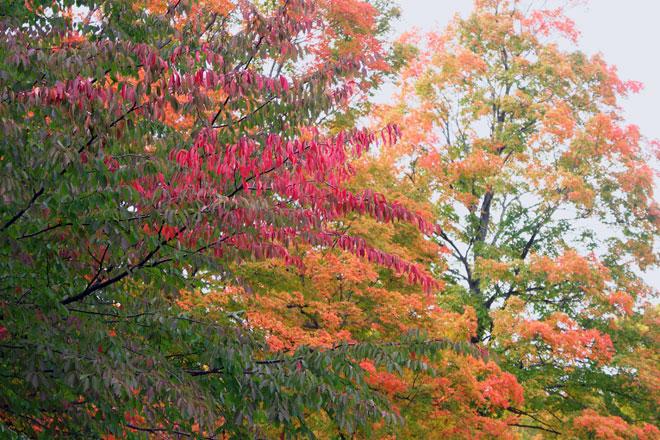 Vivid reds and orange.......