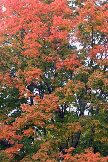 Orange and green heaven.....