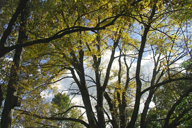 Foliage at the Moose Hill Audobon Sanctuary in Sharon, MA