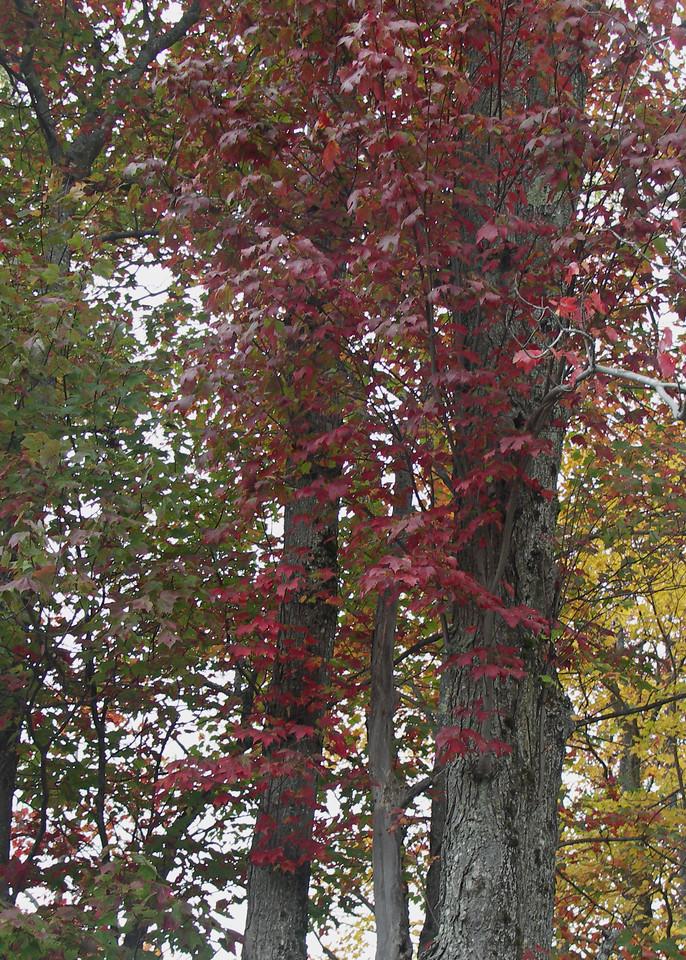 Vermont Autumn Colors