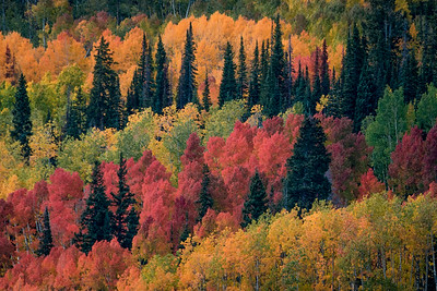 Colorado Autumn Colors, near Crested Butte, Colorado