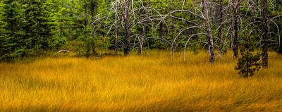 Golden Meadow - near Taquamenon Falls, Michigan