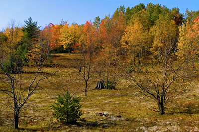 Autumn Colors north of Pullup Lake in Hiawatha Sportsmens Club.