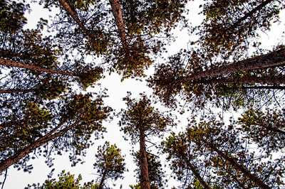 Up in the Air among the Pines.  Newberry, MI