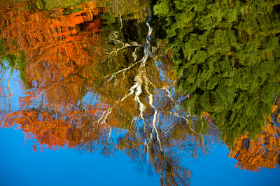 Autumn Reflections at the Mouth of the Rock River, Carnegie Woods.  Naubinway, MI