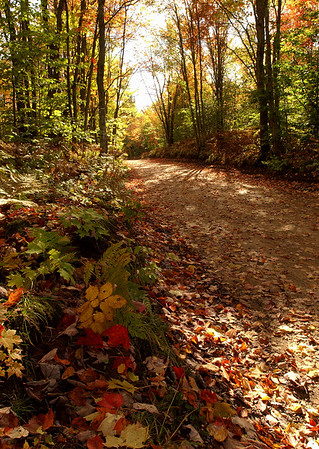 Autumn Road - Michigan's Upper Peninsula near Newberry