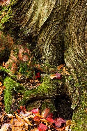 Tree Bark and Roots
