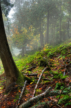 Hillside in the fog - Naubinway, Michigan