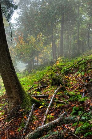 Hillside in the fog - Naubinway, Michigan