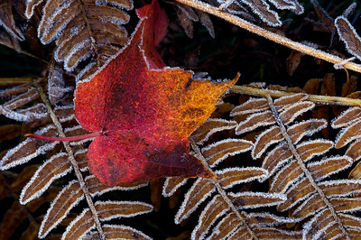Autumn Morning Frost - Naubinway, Michigan
