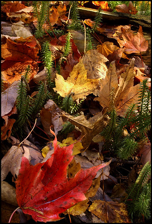 New Growth among fallen leaves.