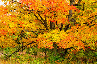 A Burst of Color!  -  Simmons Woods, MI  -  October, 2009