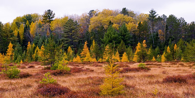 Autumn Meadow - M-28 near Seney, MI  October, 2009