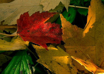 Colorful Leaves with Dew in Morning Light