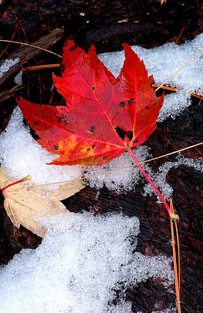 Red Leaf on Ice - Naubinway, Michigan