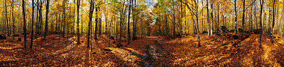 Panorama of Simmons Woods near Gould City, MI