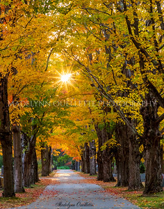 Sun Dappled Lane in Autumn