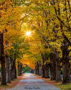 Sun Dappled Lane in Autumn