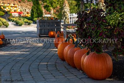 Pumpkin line up