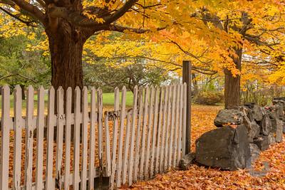 Rye Autumn