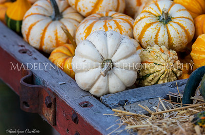 A Wagon Load of Pumpkins