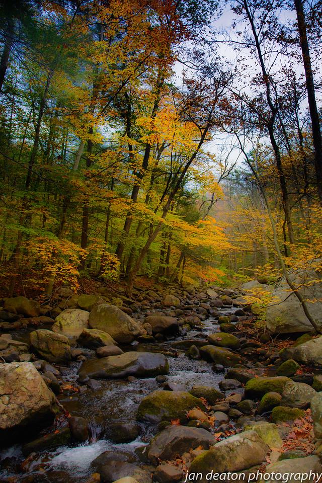 Autumn Brook 2