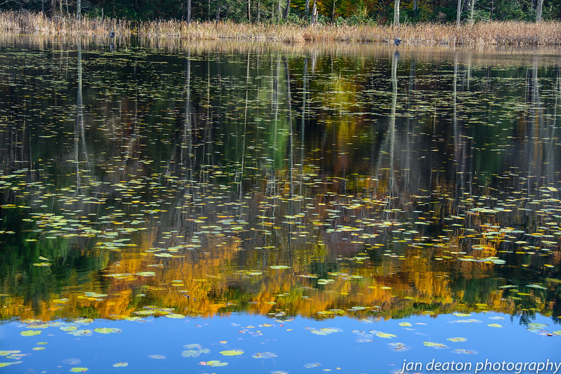 Autumn Reflections in Pond