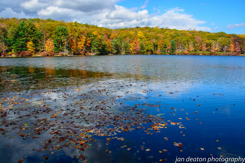 Floating Leaves in Fall