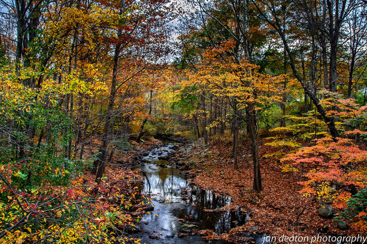 Stream in Autumn