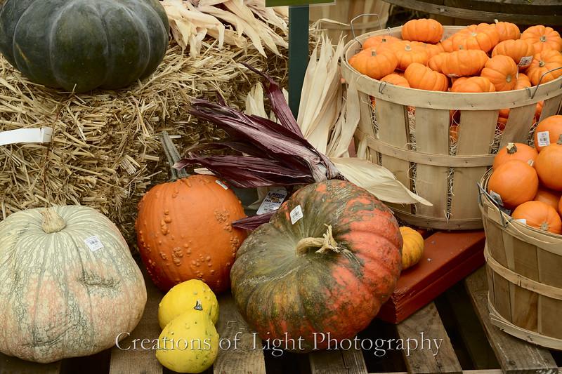 Autumn Shots 43